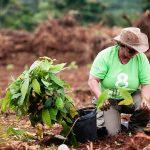 Mit Hilfe von 3.000 Kleinbauern den Regenwald erhalten