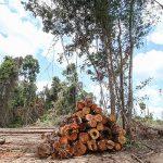 """Tag Amazoniens: Bevölkerung steht hinter den """"Hütern des Waldes"""""""
